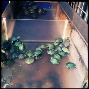 And some turtles too!